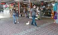 Ördekleriyle çarşı pazar geziyor, görenleri şaşkına çeviriyorlar