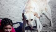 Kayıp köpeği için polise başvurdu