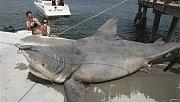 Kovid-19 aşısı için binlerce köpek balığı katledilebilir