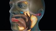 Bilim insanları kafatasında yeni organ keşfetti