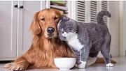 Evcil hayvan sahipleri dikkat!