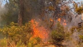 Alanya'da çıkan yangın yerleşim yerlerine sıçramadan söndürüldü