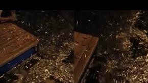 Alanya'da balıklar kıyıya vurdu
