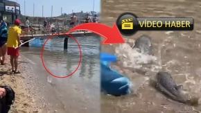 Dev balon balıkları sahile vurdu