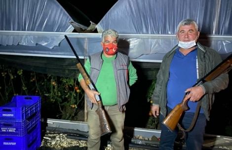 Domatesin fiyatı artınca seralara dadanan hırsızlar için silahlı nöbet tutuyorlar